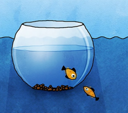 caged fish staring at free fish