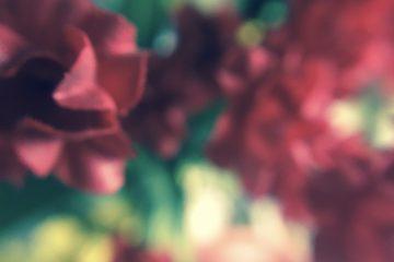lifeflowers